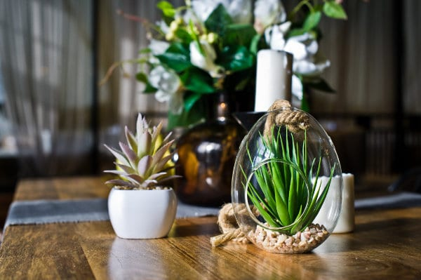 Pflanzen für Luftfeuchtigkeit